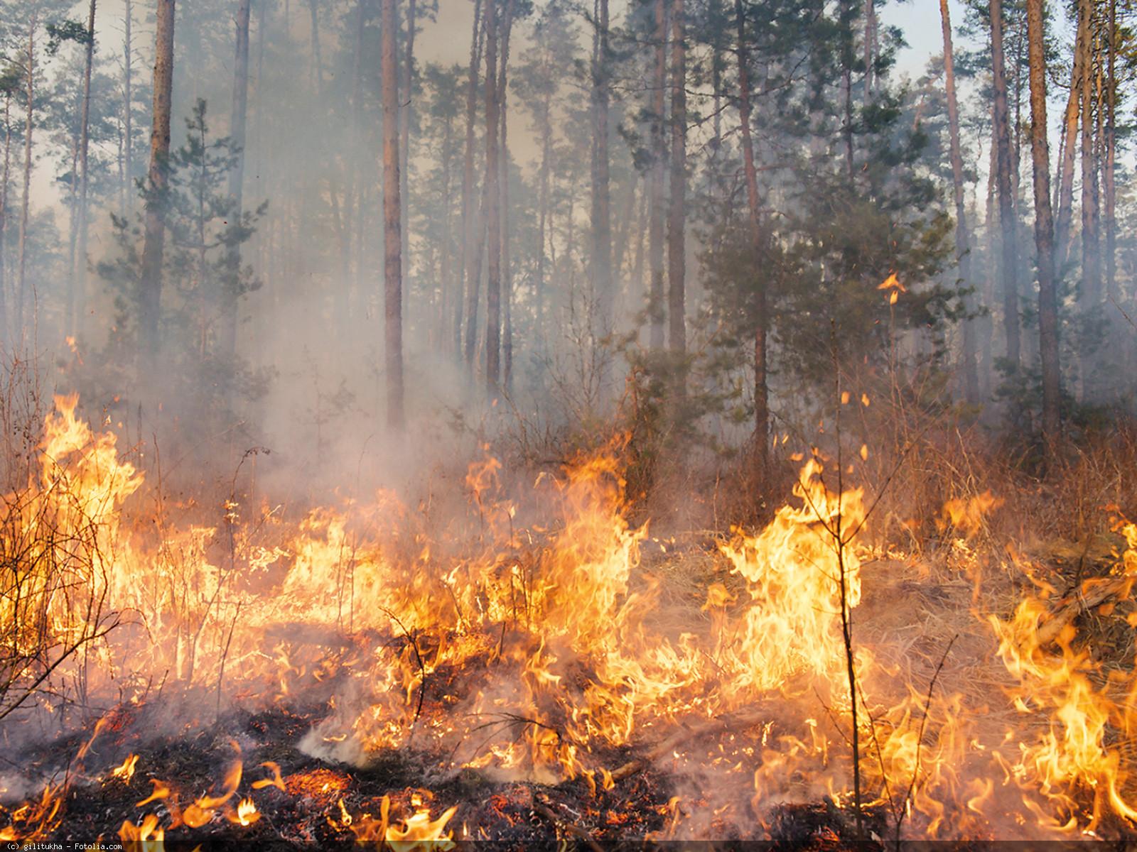 Neff faszinieren Waldbrände – und wie sich die Natur danach erholt.